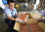 태국산 달걀 200만개 실종 미스터리