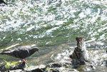 [포토에세이] 무더운 여름, 열 식히는 비둘기