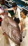 시인 최원준의 부산탐식프로젝트 <57> 부산 앞바다 '전설의 물고기' 돗돔