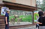 [바캉스 특집] 더위夜 물렀거라, 밤을 잊은 동물원으로 '야반도주' 하자