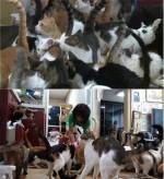 '리얼스토리 눈' 고양이 90마리 돌보느라 현금서비스 받는다는 캣맘