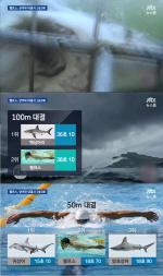 'JTBC 뉴스룸' 펠프스, 상어와 수영 대결서 1승 2패? … '컴퓨터 그래픽으로 합성'