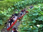힐링 으뜸촌 <29> 진주 비실연꽃마을