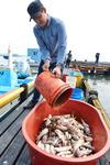 폭염에 남·동해안 어류 폐사 확산