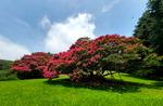 [포토에세이] 화지산 배롱나무