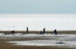 갯벌에서 바지락 캐는 어민들
