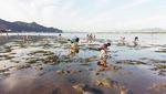 시인 최원준의 부산탐식프로젝트 <64> 서낙동강 하구 갯벌조개