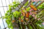 '오래된 미래 도시'를 찾아서 <35> 말레이시아 페낭에서 만난 자연과 나비