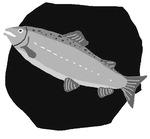 [도청도설] 은빛 물고기, 연어