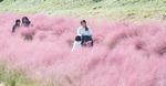 [포토에세이] 넘실대는 분홍물결