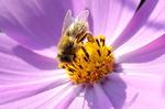[포토에세이] 꿀벌의 가을걷이