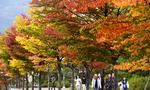 [포토에세이] 알록달록 손바닥 펼친 가을