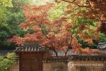 """[창덕궁 후원 예약] 가을의 고궁을 즐기려면? … """"하루 단 6번의 기회"""""""