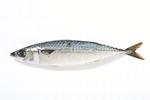 고등어 어획·소비·값 하락 '삼각파고'