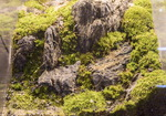 혹시 수족관 아냐…돌·이끼로 꾸민 나만의 자연