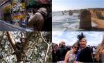 """[세계테마기행] 멜버른·시드니·서호주·브룸…  """"드넓은 호주의 매력"""""""