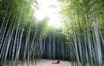 생명의 숲을 거닐다 <1> 기장군 아홉산 대나무숲