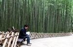 고려 詩에도 등장한 십리대숲