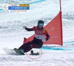 평창올림픽 최고의 깜짝 명물  '용감한 청설모'