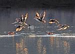 [포토에세이] 박력 넘치는 원앙새의 날갯짓