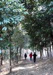 생명의 숲을 거닐다 <5> 진해만 생태숲