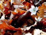 [포토에세이] 봄, 봄이 왔어요 - 변산바람꽃