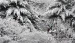 춘분에 구름 끼고 비오는 건 무병 보리 풍년 길조...대구 부산 눈 오는 건 뭐지?