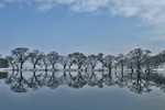 [포토에세이] 임과 걷고 싶은 반곡지 둑길