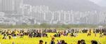 미세먼지에 갇힌 유채꽃 축제