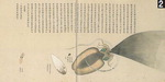 해양문화의 명장면 <16> 오징어의 박물학, 오징어의 정치학