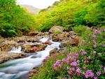 [포토에세이] 지리산 의신계곡의 봄맞이