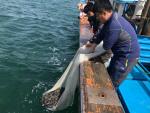 기장 연안바다 돌돔 종자 방류