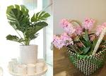 시들지 않는 청량한 조화, 내집 바꾸는 녹색 에너지