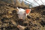 [책 읽어주는 남자] 고기로 태어나서 겪는 닭·돼지·개의 수모기 /정광모