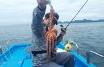 [조황] 통영 사량도 해역 문어 마릿수 보장