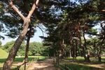 철갑 두른 소나무가 엄호하는 내물왕릉, 남천 가로지르는 월정교서 달빛 데이트