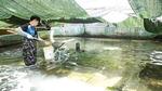 뜨거운 바다…수산업 대재앙 <상> 부산 기장 육상 양식장 르포