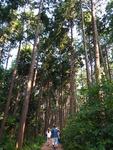 생명의 숲을 거닐다 <15> 통영 미래사 편백숲