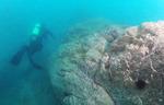 뜨거운 바다…수산업 대재앙 <하> 바다환경 악화와 대책