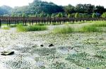 창녕 우포늪 생태체험장에서 다시 핀 멸종위기종 가시연꽃