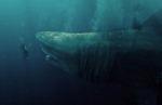 새영화 '메가로돈'…조용히 접근한 무게 100t·길이 27m 상어의 공포