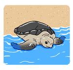 [도청도설] 바다거북 살리기