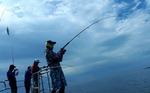 [조황] 포항 앞바다 다랑어·대삼치 '폭풍 입질'