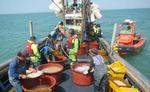 해수부 불법 어획·유통 집중 단속