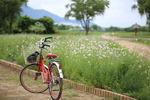 [포토에세이] 삼락공원 자전거사용법