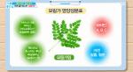 모링가 효능 무엇? 각종 영양소 풍부&혈관 청소
