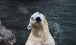 국내 유일 북극곰 '통키'영국 이주 앞두고 하늘 나라로