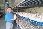 밀양 늘푸른농산, 호주에 새송이버섯 4.2t수출