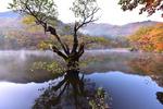[포토에세이] 주산지 가을풍경