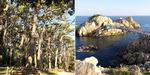 해송·기암괴석 호위 속 꽁꽁 숨은 쪽빛 바다